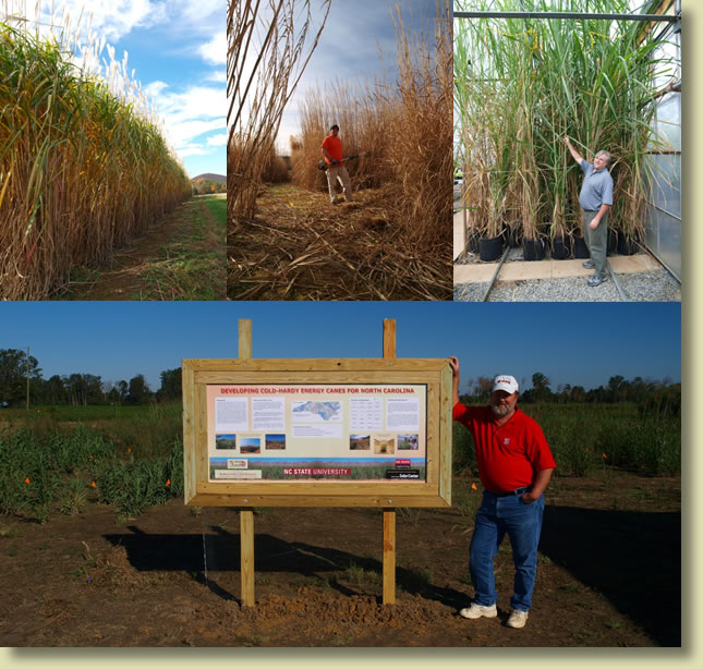 bioenergy research plots and poster