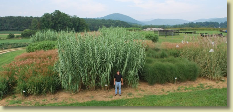 bioenergy crops research plots