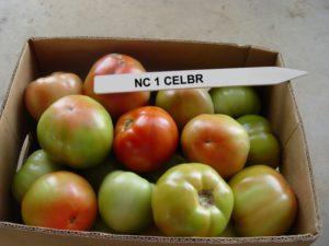 NC 1 CELBR tomatoes
