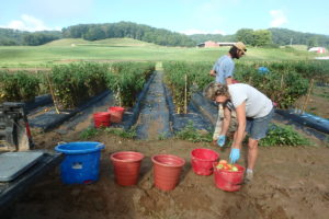 Cover photo for Want a Temporary Position Working on Hops, Organic Vegetables and More?