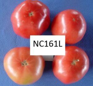 NC 161 L tomatoes