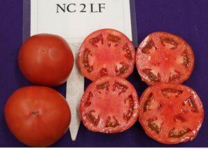 NC 2 LF tomato