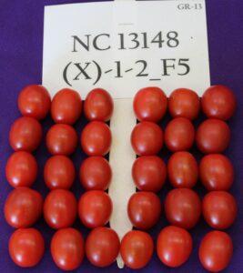 NC9 Grape Tomato